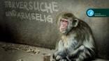 Tierversuche sind armselig