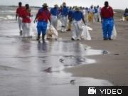 Ölkatastrophe - USA ermittelt gegen BP