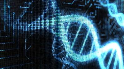 DNS Erbgut