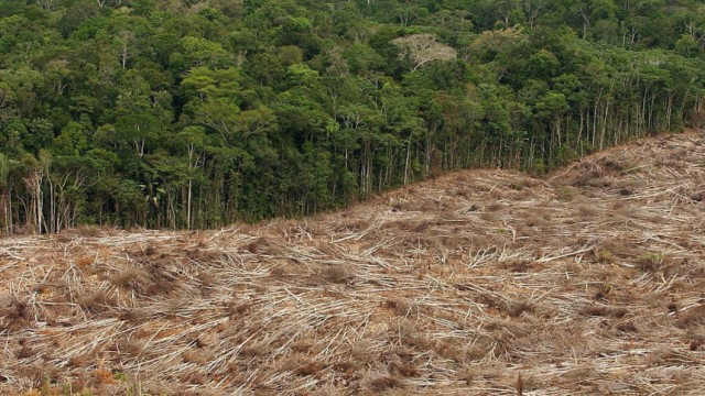 Abholzung im Amazonasgebiet