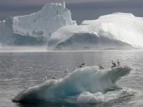 Kinderdienst: In der Arktis leben mehr Tiere