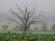 Baum, dpa