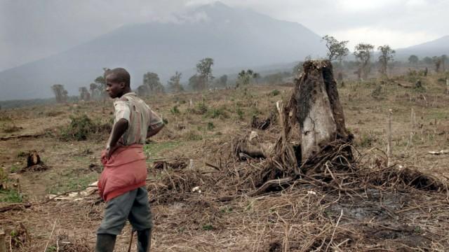 Zerstörte Urwald im Viruga Nationalpark, 2004
