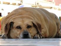 Ach du dicker Hund! Übergewichtige Vierbeiner wieder in Form brin