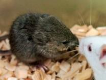 Forscher klonen jahrelang tiefgekühlte Mäuse