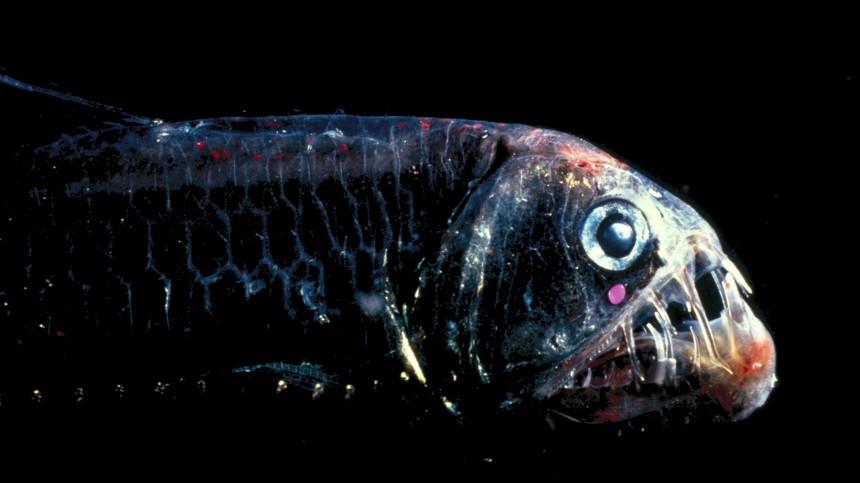 Umweltschutz Meeresbergbau