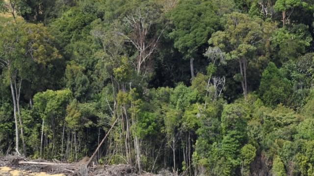 Umweltschutz Regenwald