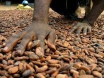 A producer spreads cacao seeds for drying at Yaokoka in the Oume region near Abidjan