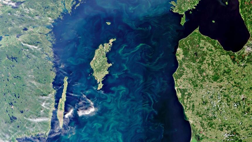 Riesiger Algenteppich auf der Ostsee