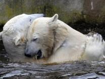Eisbaer Knut bald wieder allein