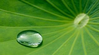 Wassertropfen auf Lotusblatt