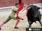 Katalonien verbietet Stierkampf