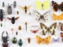 Bayerische Insekten