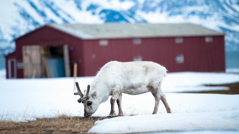 Rentier Arktis