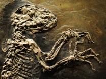 Fossiler Halbaffe 'Ida' erstmals wieder vereint