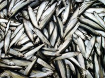 Buergermeister von Fischereiorten protestieren gegen EU-Quotenplaene